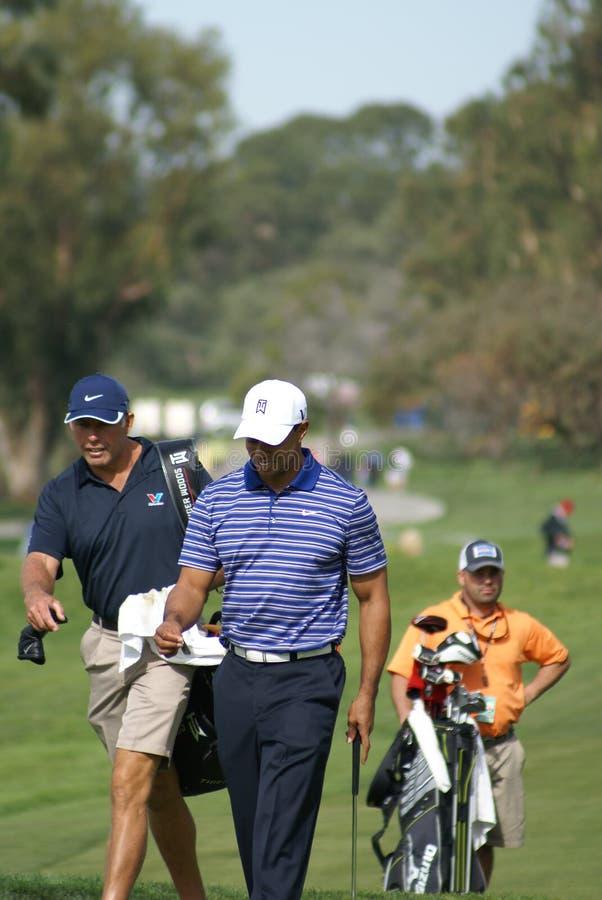 Jogador de golfe profissional de Tiger Woods foto de stock royalty free