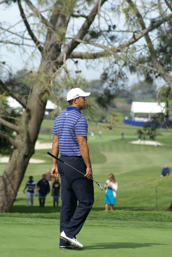 Jogador de golfe profissional de Tiger Woods fotografia de stock royalty free