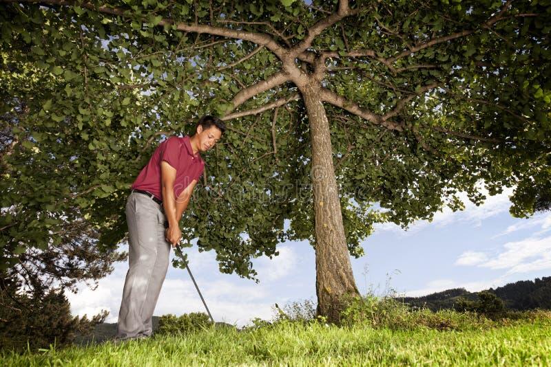 Jogador de golfe sob a árvore. fotos de stock