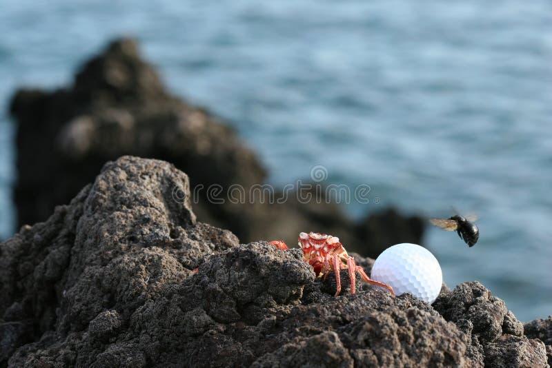 Jogadores de golfe de Havaí fotografia de stock