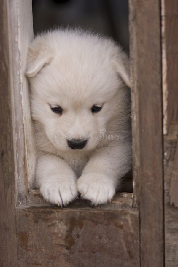 Jogando o filhote de cachorro imagens de stock