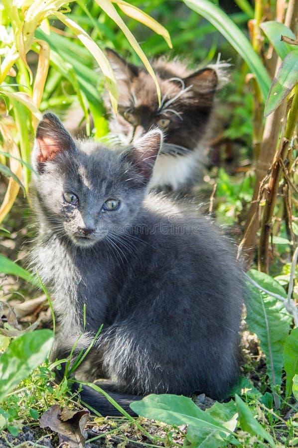 Jogando o gatinho fotos de stock royalty free