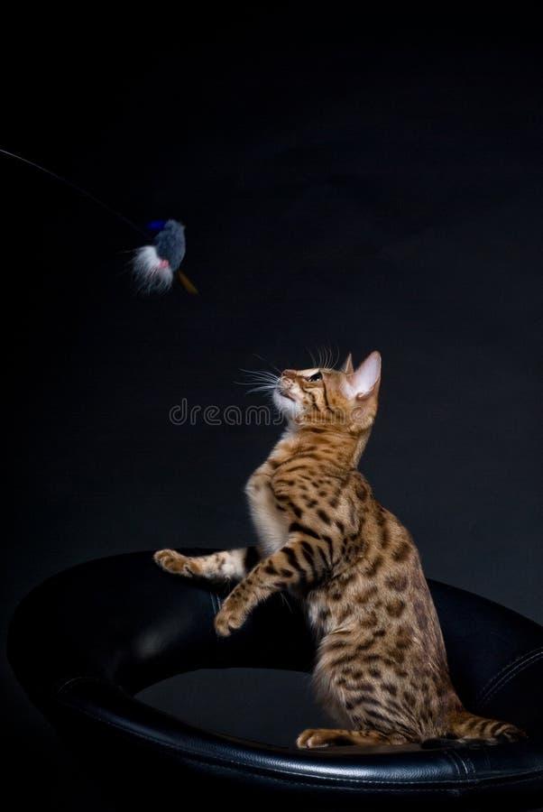 Jogando o gato fotos de stock