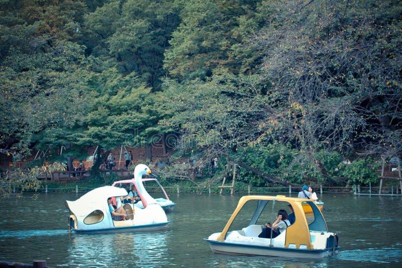 Jogando o watercycle no parque de Inokashira fotos de stock