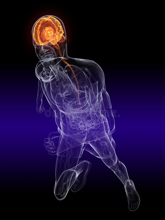 Jogger - active brain. 3d rendered illustration of a trancparency human jogger with highlighted brain vector illustration