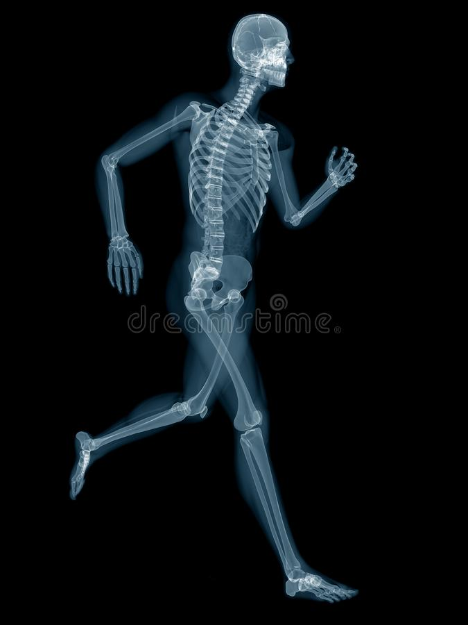 A jogger. Medically accurate 3d rendering of a jogger royalty free illustration