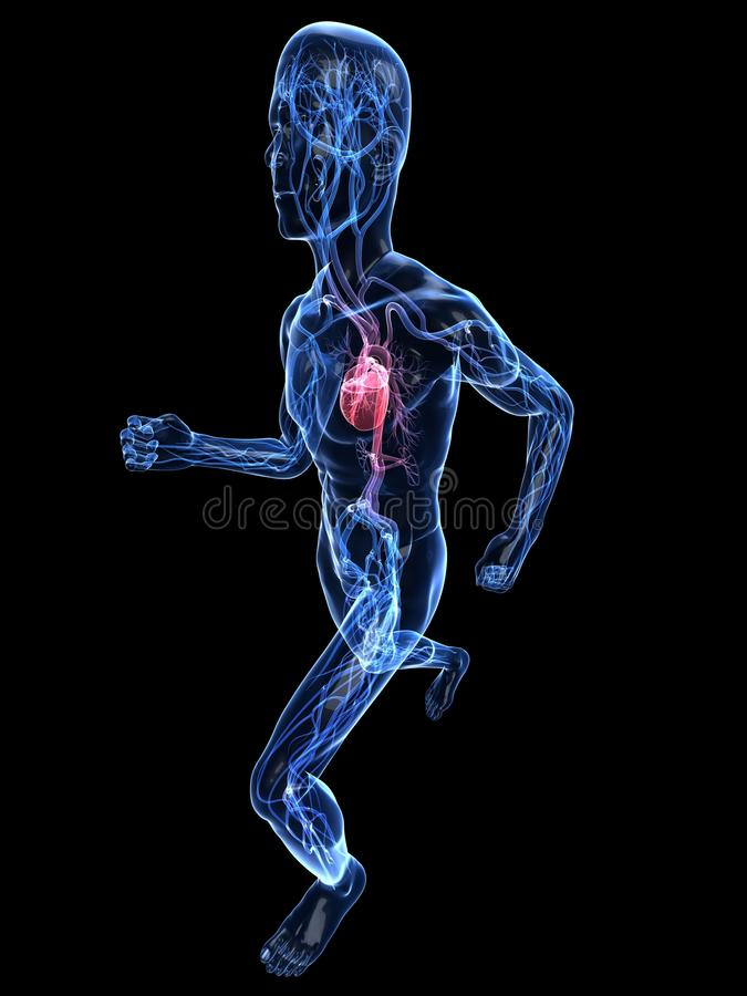 Jogger - vasculair systeem royalty-vrije illustratie