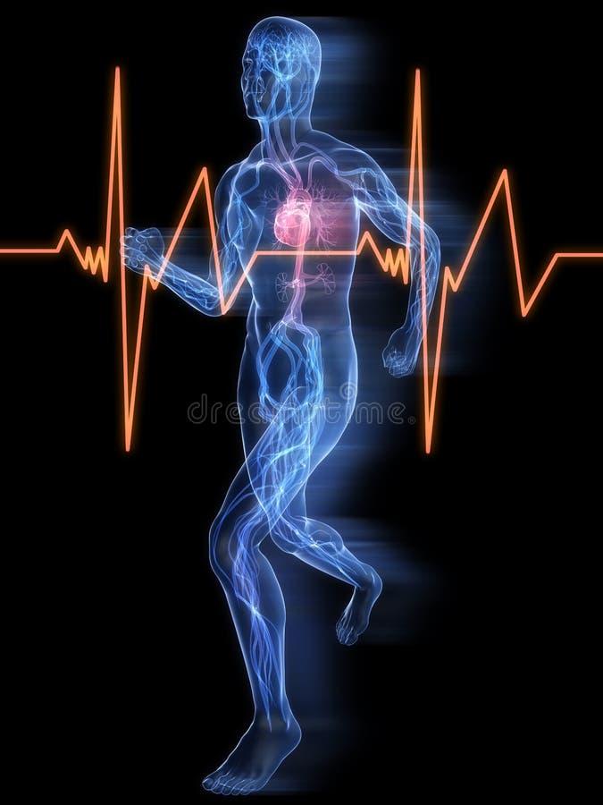 Jogger - vasculair systeem vector illustratie