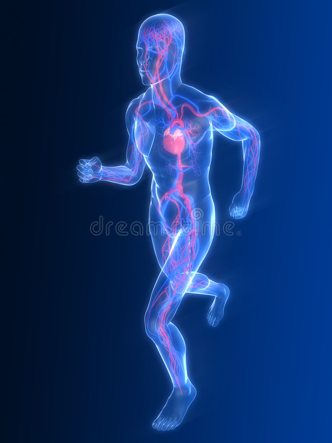 Jogger - vascular system stock illustration