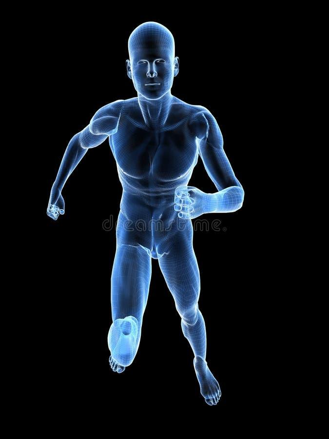 Jogger wireframe. 3d rendered anatomy illustration of a jogger stock illustration