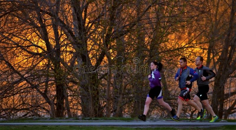 3 joggers i solnedgången royaltyfri fotografi