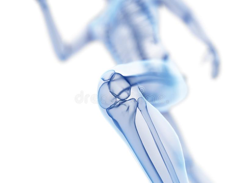 A joggers knee. 3d rendered illustration of a joggers knee royalty free illustration