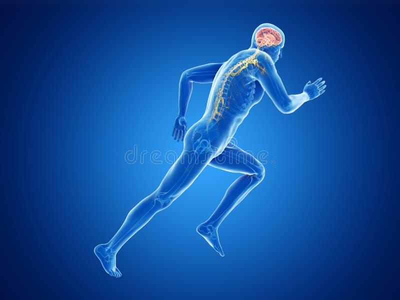 joggers móżdżkowi ilustracji