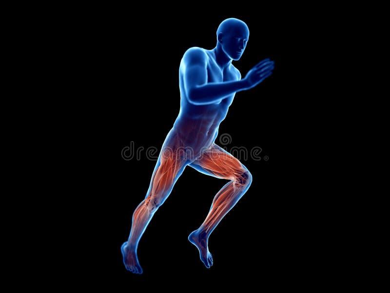 joggers mięśnie royalty ilustracja