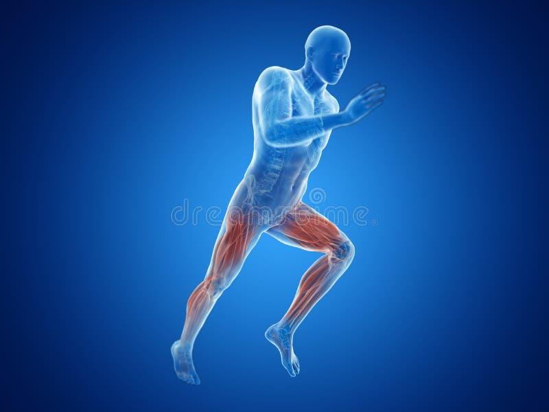 joggers mięśnie ilustracji