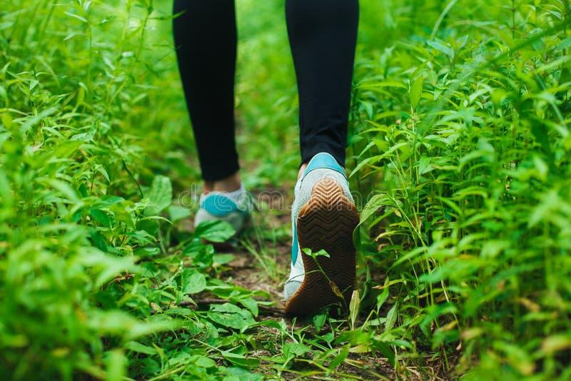 Jogging в пуще стоковые фотографии rf