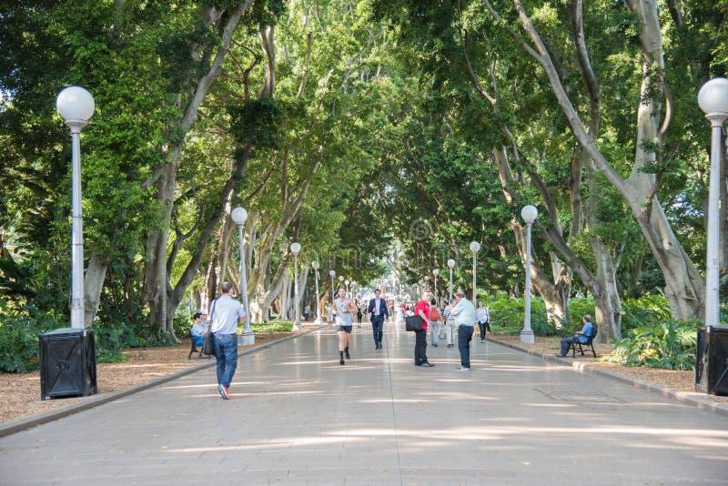 Jogging Гайд-парк стоковые фото