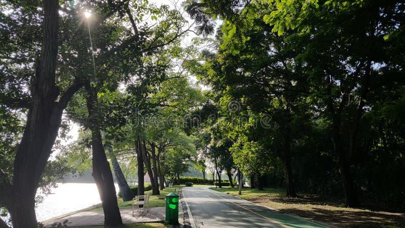 Jogging и майна велосипеда в парке стоковые фотографии rf