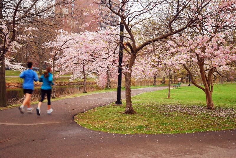 Jogging pod wiosen okwitnięciami obrazy royalty free