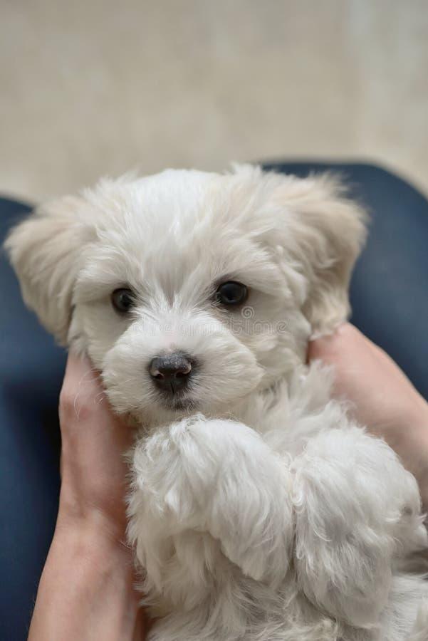Jogo adolescente do menino com o cão de cachorrinho branco foto de stock