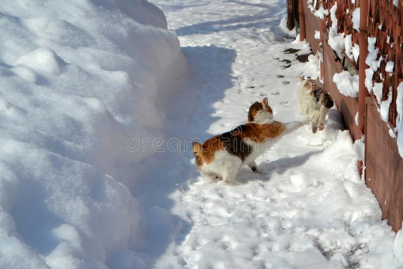Jogo com estes gatinho feliz fotografia de stock royalty free