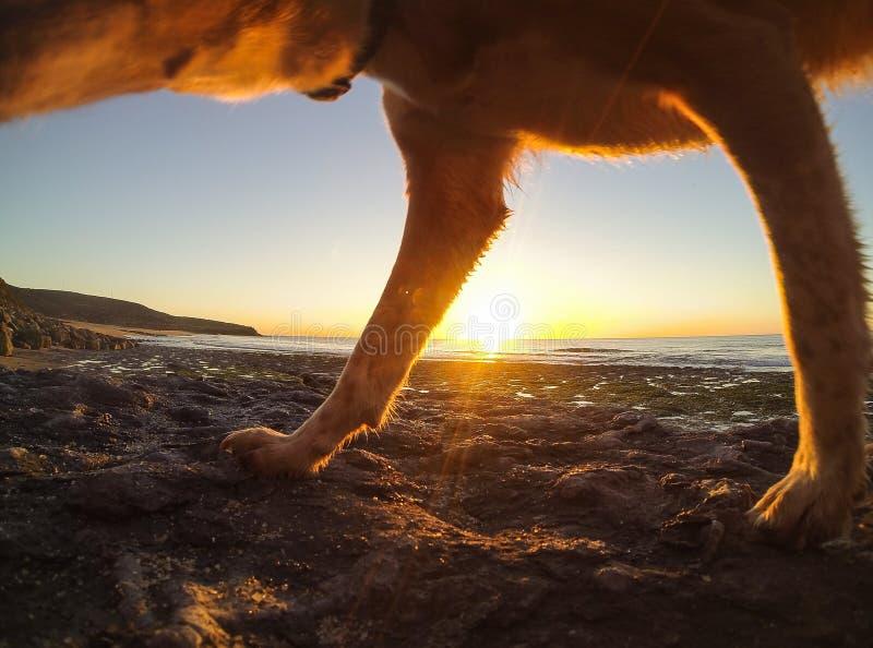 Jogo com meu cão na praia foto de stock royalty free
