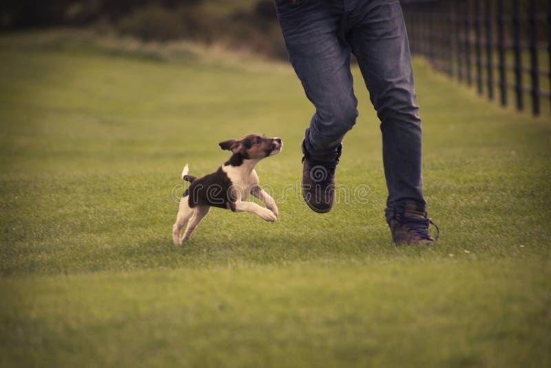 Jogo com o cachorrinho do cão do lebreiro imagem de stock