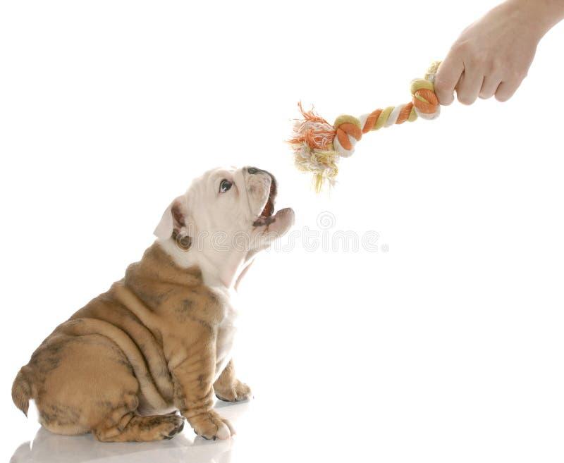 Jogo com um filhote de cachorro fotos de stock