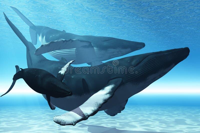 Jogo da baleia ilustração stock