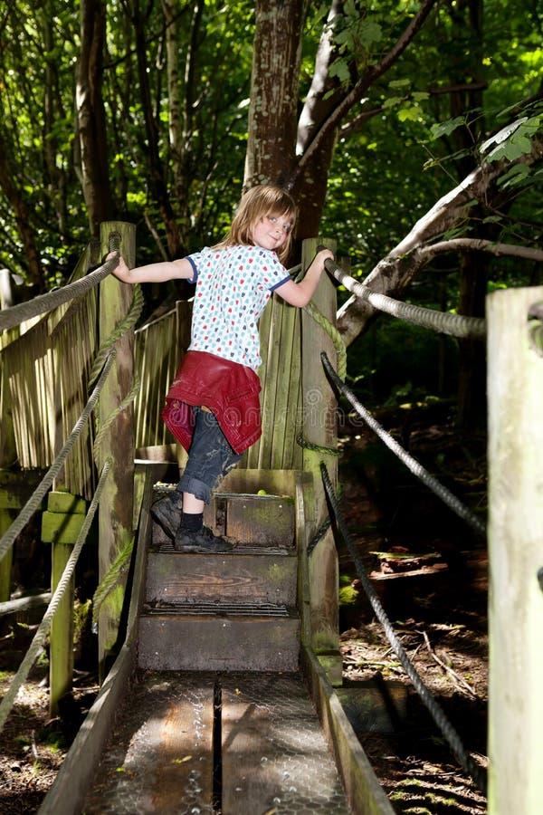 Jogo da criança das pontes das árvores de floresta imagem de stock