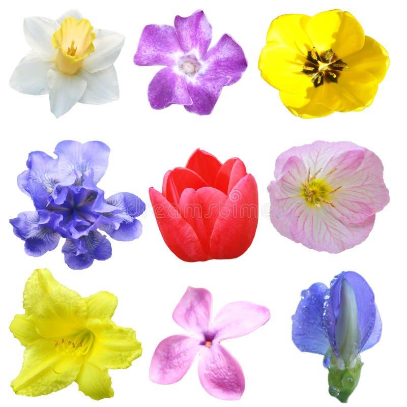 Jogo da flor fotografia de stock