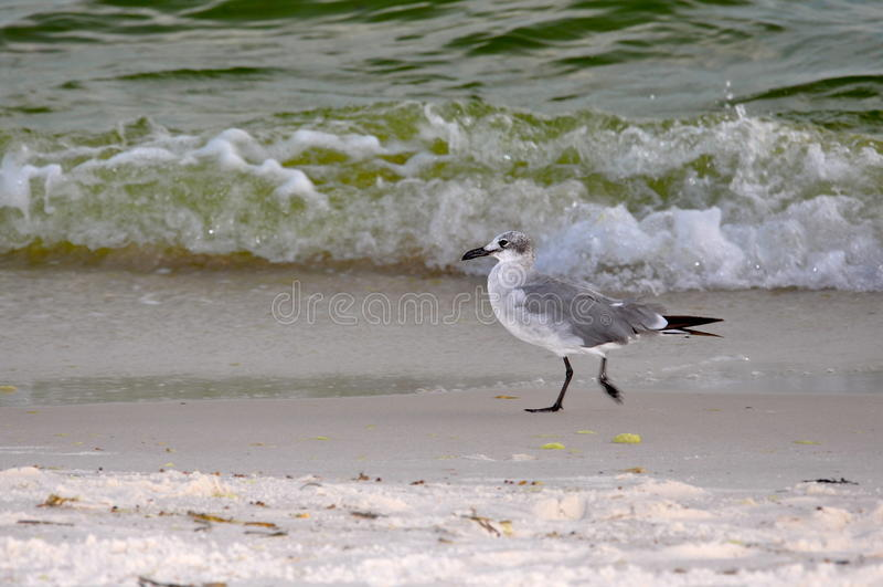 Jogo da gaivota nas ondas foto de stock