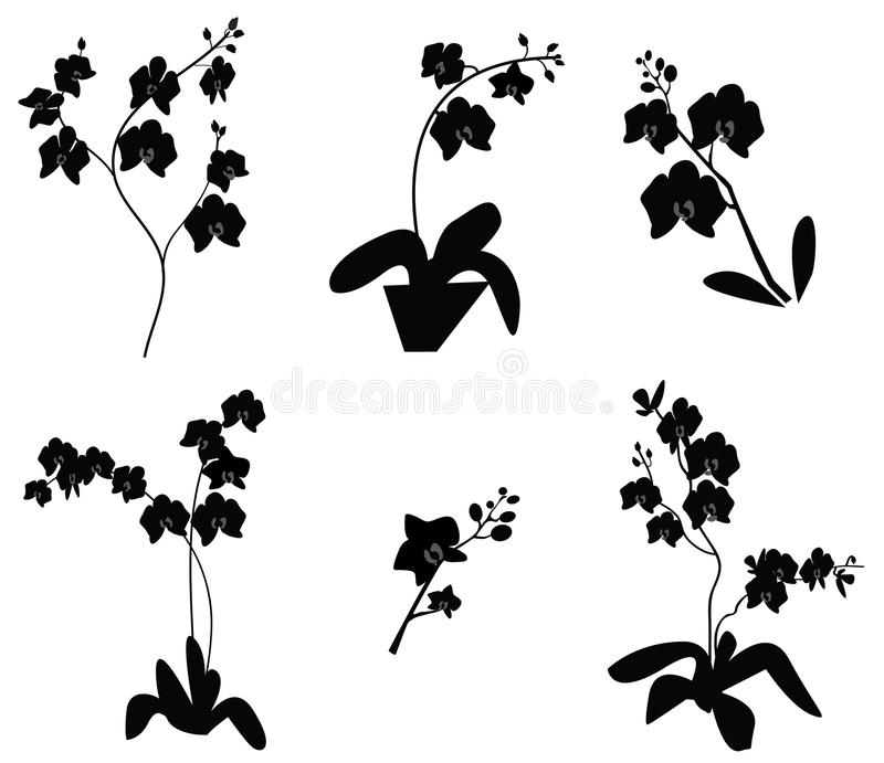 Jogo da silhueta da filial da orquídea ilustração stock
