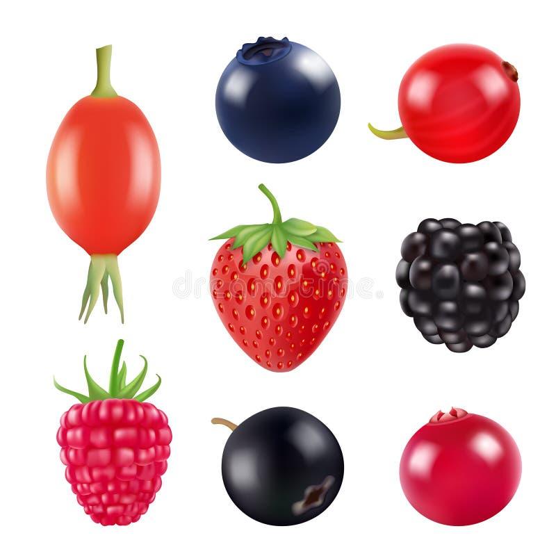 Jogo das bagas Imagens realísticas do isolado dos frutos frescos e das bagas no branco ilustração royalty free