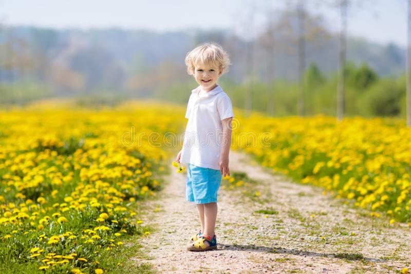 Jogo das crianças Criança no campo do dente-de-leão Flor do verão imagens de stock
