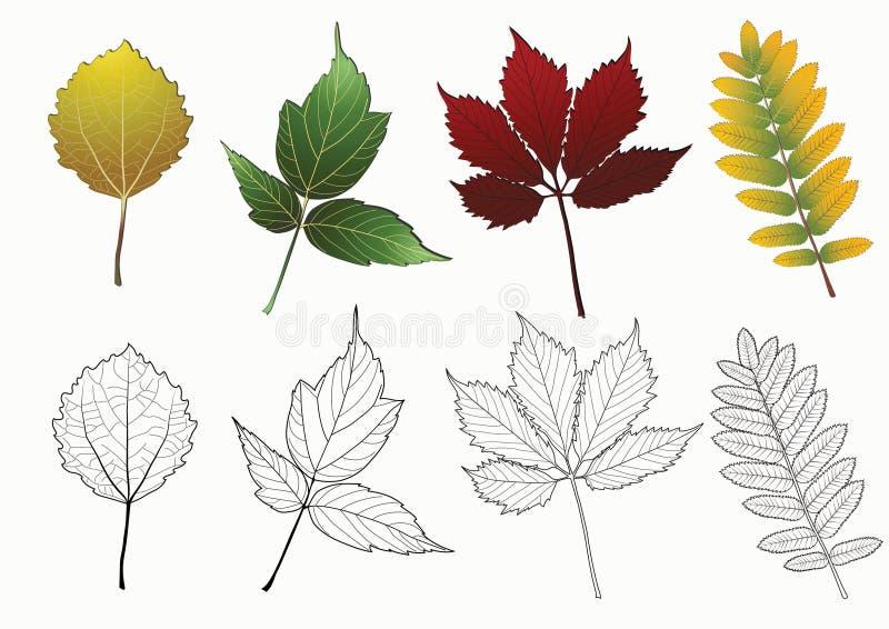 Jogo das folhas de outono. ilustração do vetor