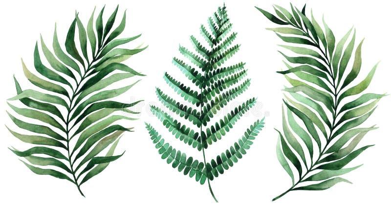 Jogo das folhas tropicais Selva, ilustra??es bot?nicas da aquarela, elementos florais, folhas de palmeira, samambaia e outro M?o  ilustração royalty free