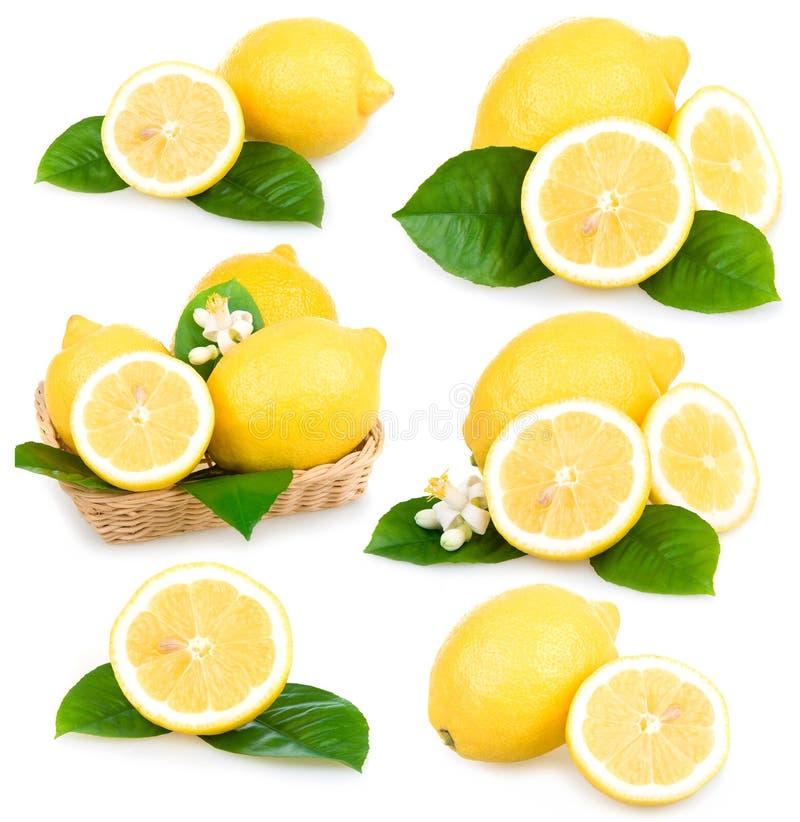 Jogo das frutas maduras do limão isoladas fotografia de stock royalty free