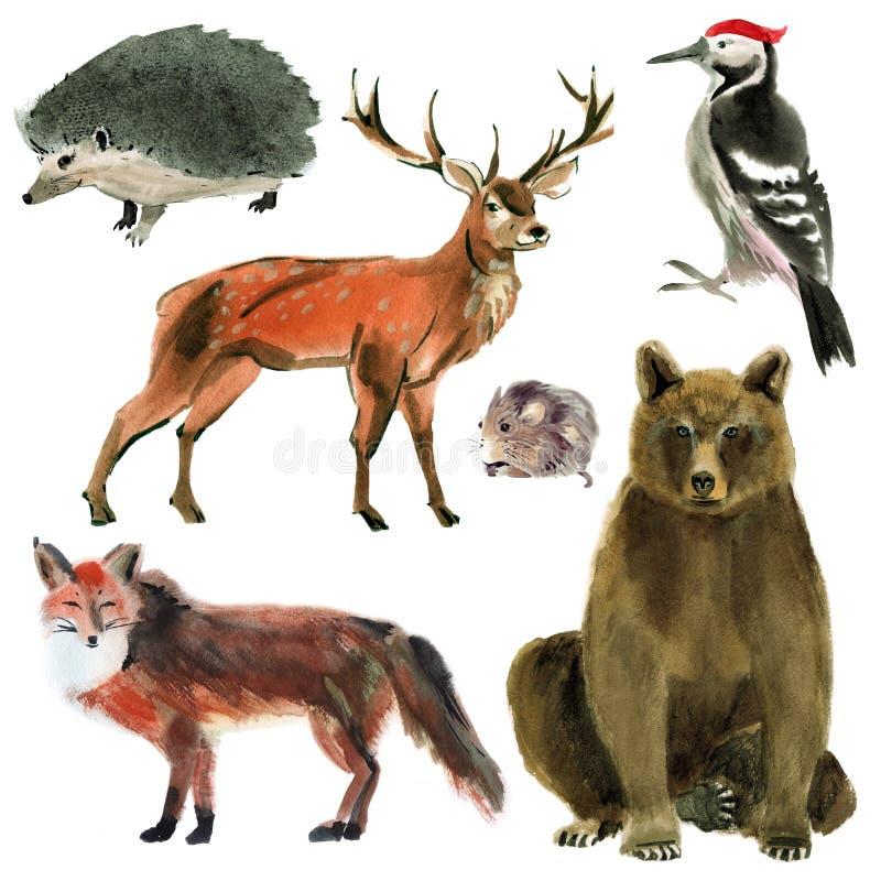 Jogo de animais da floresta Ilustração da aquarela no fundo branco ilustração royalty free