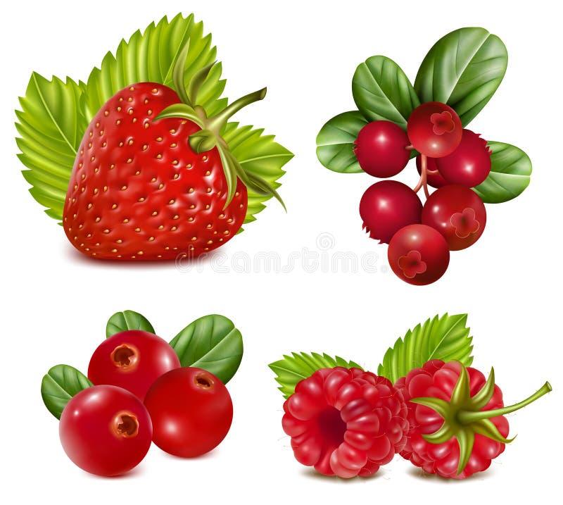 Jogo de bagas vermelhas com folhas. ilustração stock