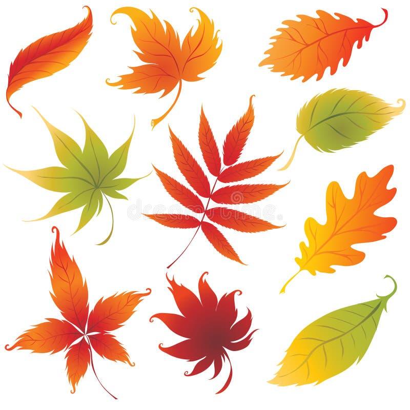 Jogo de elementos do projeto das folhas de outono do vetor ilustração stock