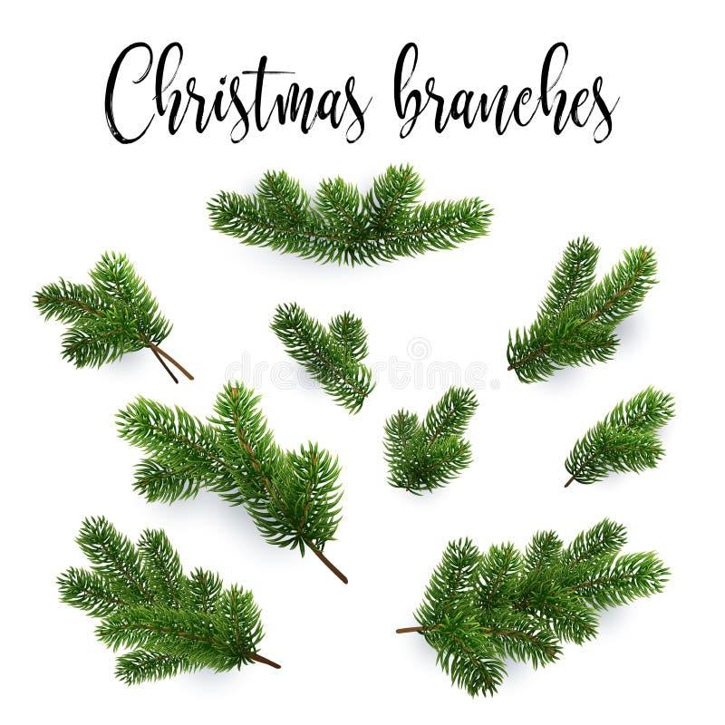 Jogo de filiais do abeto Árvore de Natal, pinho, coníferas ilustração do vetor