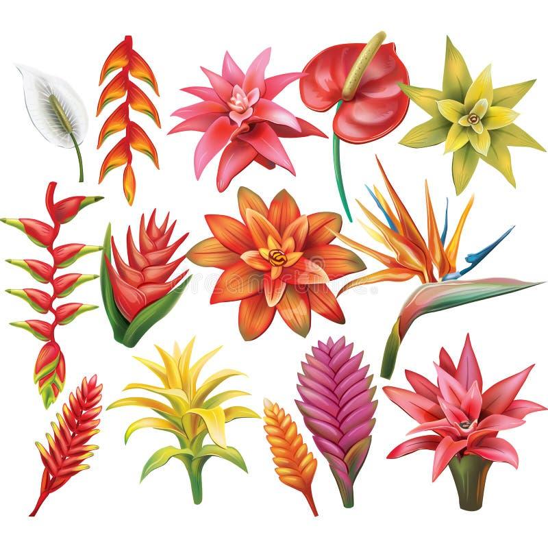 Jogo de flores tropicais ilustração royalty free