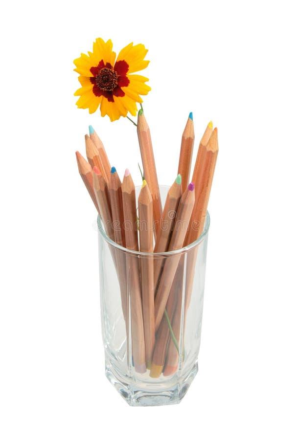 Jogo de lápis de madeira coloridos e de um fl amarelo foto de stock