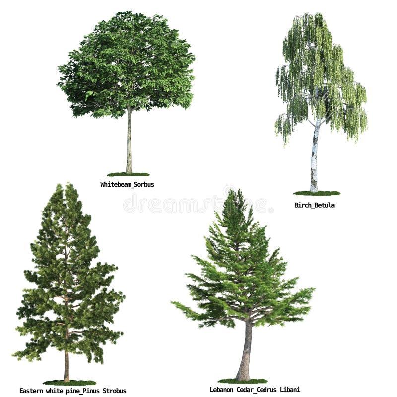 Jogo de quatro árvores isoladas de encontro ao branco puro ilustração royalty free