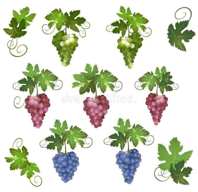 Jogo de uvas diferentes com folhas verdes ilustração stock