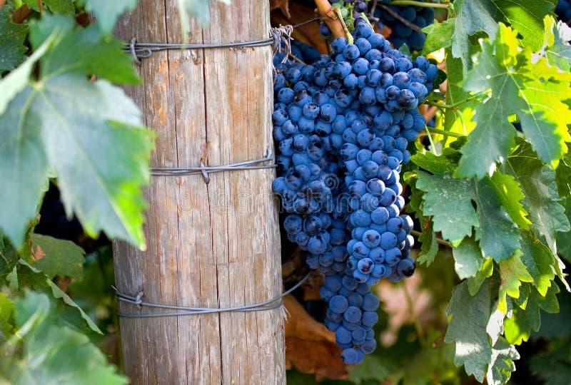 Jogo do acionador de partida do vinho vermelho fotografia de stock royalty free