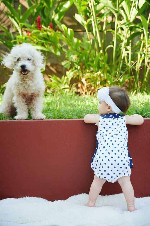 Jogo do bebê com cão de caniche foto de stock royalty free