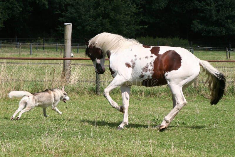 Jogo do cão e do cavalo fotos de stock