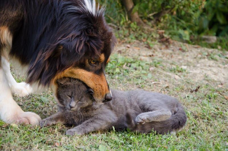 Jogo do gato e do cão fotografia de stock
